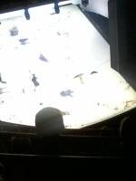 Burgtheater - Peter Handke wird von Claus Peymann inszeniert - ein Drama.jpg